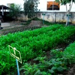 Kitchen vegetable teaching garden on the AHC premises